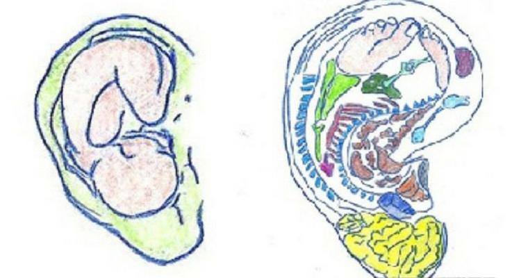 pince-a-linge-oreillle (2)