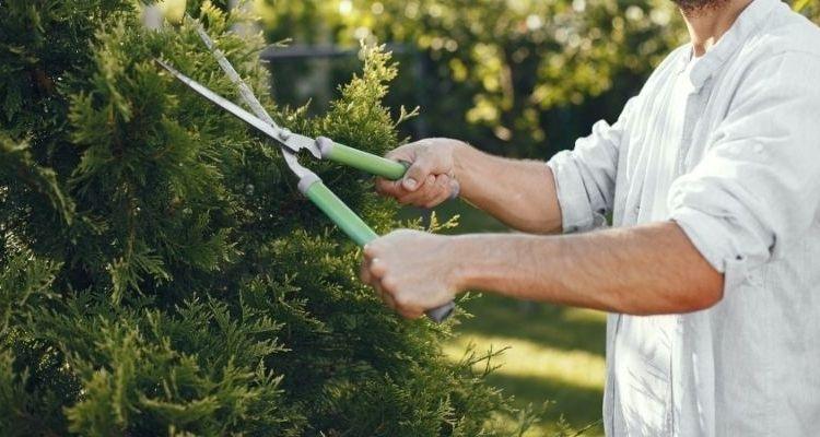 Comment tailler les plantes