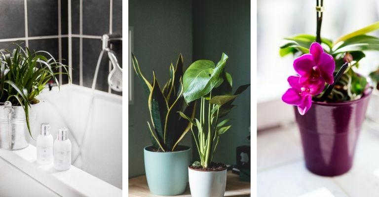 plantes plus adaptées pour décorer une salle de bain qui a une fenêtre