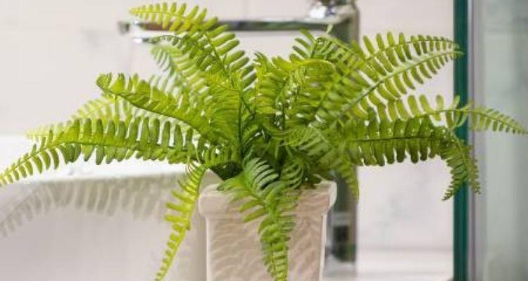 plantes adaptées pour une salle de bain sans lumière