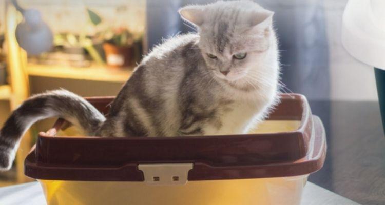 choisir la litière chat